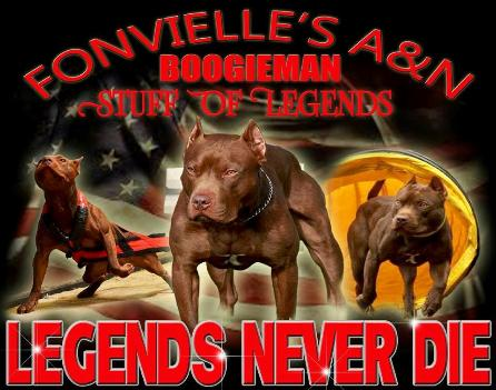 Boogieman Most Titled American Pit Bull Terrier in the world