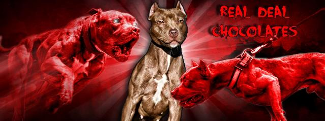 pictures of a red nose pitbull